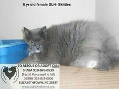 URGENT CATS: NEW EUTH LIST FOR FRI 9/5. PLEASE REACH OUT TO RESCUES, FRIENDS, FAMILY ETC. SHELTER FULL
