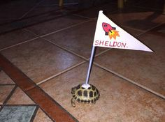 DIY Turtle Flag - so your tortoise can walk around the house, but can also be easily found. PetDIYs.com