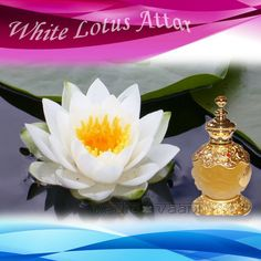 White Lotus Attar, The White Lotus Attar is famous for its wonderful smell. Associated with the Hindu Goddess of Wealth, the white lotus is considered very holy, and as such is used in religious ceremonies. It is also used in the perfumery industry. Direct use of this attar should be avoided during pregnancy.