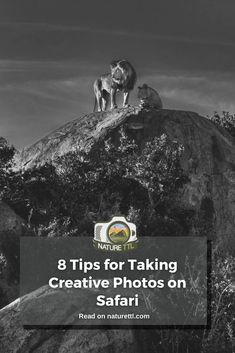 In this tutorial you'll find practical tips and inspiration for taking African safari photos with a creative twist! Photography Basics, Photography Tips For Beginners, Creative Photography, Slow Shutter Speed, African Safari, New Perspective, Creative Photos, Wildlife Photography, Cool Pictures