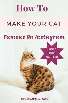 Cats With Brain Freeze Key: 8694310978 Making Money On Instagram, Find Instagram, Instagram Tips, Instagram Accounts, Make Money Online, How To Make Money, Cat Brain, How To Cat, Home Selling Tips