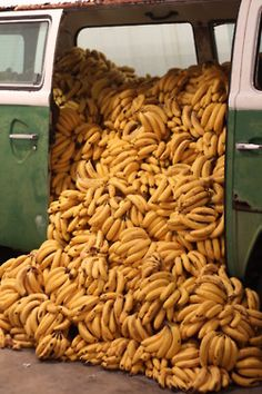 they have arrived >>> the bananananana bus has arrived