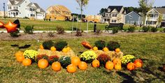 Resident pumpkin patch at Ranier Village at Ashville Park. Free pumpkin and mum for every resident! #newhomes #bishardhomes #RanierVillage