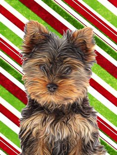 Candy Cane Holiday Christmas Yorkie Puppy / Yorkshire Terrier Flag Garden Size KJ1174GF