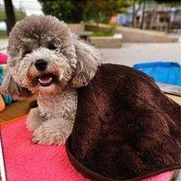 Quente macio prático Pet cão gato Coral cobertor de lã artesanal tapete 60 x 40 cm de carro Multicolor fácil