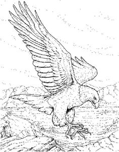 Eagle coloring pages 9