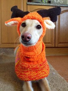 Whippet coat and hats download knitting patterns by greyhounds4me on Etsy