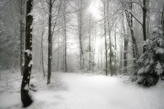 winter wood by Irca Caplikas - Photo 137104781 - Monochrome Photography, Nature Photography, Red Berries, Shades Of Grey, Nature Photos, Scenery, Fire, Earth, Snow