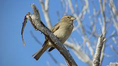 Pardal, Pássaro, Vida Selvagem, Natureza, Animal
