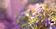 purple flowers glare 4k ultra hd wallpaper