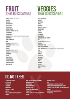 Guide to fruits and veggies for dogs