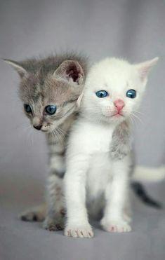 Two Adorable Kitten Siblings.