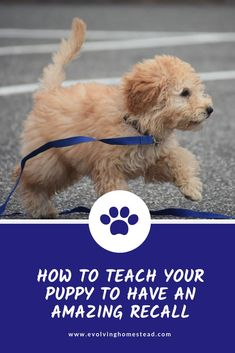 Training your dog is focused on building your relationship with your pet dog and establishing boundaries. Be firm but consistent and you will notice awesome results when it comes to your dog training adventures. Puppy Training Tips, Training Your Dog, Potty Training, Training Classes, Training Pads, Agility Training, Dog Agility, Leash Training, Training Schedule