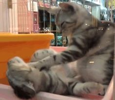 Oh yeah, that's the spot. | These Kittens Massaging Each Other Will Be The Cutest Thing You'll See All Day