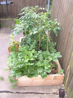 Very Small Vegetable Garden by keparo, via Flickr