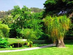 The botanical  Garden of  Val Rahmeh - Menton (06500) - Alpes-Maritimes - Provence-Alpes-Côte d'Azur - France