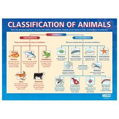 Classification of Animalia Kingdom | Well before Linnaeus, plants and animals were considered separate ...