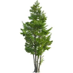 tree found on Polyvore