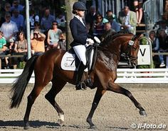 Herbstkonig Passed Away | eurodressage  12/15/16