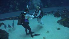 Brave Says I Do In Underwater Wedding As Sharks Circle Weddinggeorgia Aquariumevent