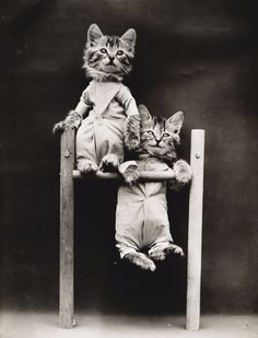 Vintage LOLcats: Adorable Old-Timey Photos of Cats Dressed As People From the 1910s
