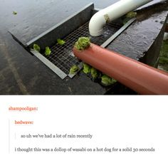 Learn to laugh again. <<<I thought they were sprouts on a hot dog