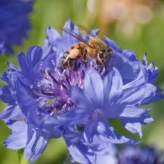 Make a Bee and Butterfly Garden for a Better Harvest