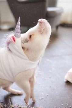 adorable pig dressed like a unicorn