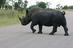#rhino