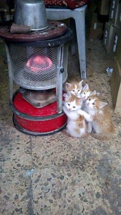 These Wuvely kittens will rock your world! Kittens in rocking chairs Cute Kittens, Cats And Kittens, Baby Animals, Funny Animals, Cute Animals, Animals Images, Crazy Cat Lady, Crazy Cats, Photo Chat