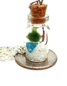 Marimo moss ball necklace terrarium with white sand by EclecticZen, $19.00