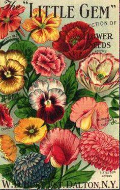 Vintage Can & Seed Labels - Little Gems Flower Seeds