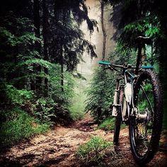Herkese doğayla başbaşa bir pazar diliyorum #bisikletliyaşam #bike #bisikletturu #cycling #bisiklet #biketour #instabikers #instabicycle #instanice #bisikletsevenler #bisikletözgürlüktür #bisikletliulasim #enerji #mersinbisiklet #bubisiklet #görsel #manzara #doğa #çocuk #uzunyol #istanbuldayaşam #doğa #istanbul #manzara #orman