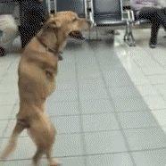 A Dog Is A Dog Animals Giff #3401 - Funny Dog Giffs| Funny Giffs| Dog Giffs