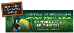 Explore magnificent gardens and discover rare and beautiful birds, reptiles and mammals at the Montecasino Bird Gardens. Amphibians, Mammals, Days Out With Kids, Relaxing Day, Family Outing, Beautiful Birds, Kids Learning, Gardens, Entertaining