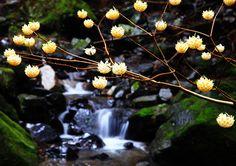 みつまたの森 その2 - 風景写真春秋