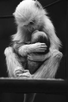 A Mother's love. Until we have children, we don't understand what it is like to live outside of ourselves.