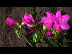 Toda a beleza das flores se abrindo...