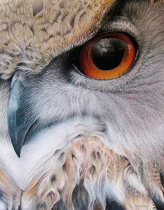 Soft tufts of hair, beautiful birds of prey.the Eurasian Eagle Owl by Martin Aveling. Beautiful Owl, Animals Beautiful, Cute Animals, Owl Art, Bird Art, Regard Animal, Animal Close Up, Close Up Art, Eye Close Up