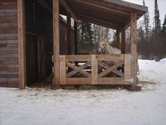 Brule house rental - Horses in the stable attached to the garage