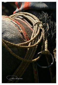 ARGENTINA. Lazo trenzado en cuero crudo que utiliza el Gaucho Argentino para el manejo de animales...