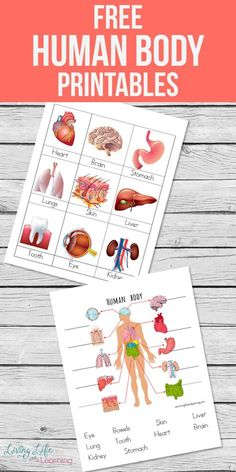 My son loves learning about the human body so I created these human body printables for kids to introduce him to the major organs in the body. A fun overview of the entire human body, have you tried it with your kids? Kid Science, Preschool Science, Science Lessons, Teaching Science, Science Activities, Activities For Kids, Science Biology, Science Crafts, Science Ideas