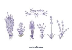 Lavender Vector Bullet Journal Beginning, Bullet Journal Leaves, Bullet Journal Notebook, Bullet Journal Themes, Bullet Journal Inspiration, Lavender Quotes, Flower Drawing Tutorials, Leaf Drawing, Flower Embroidery Designs