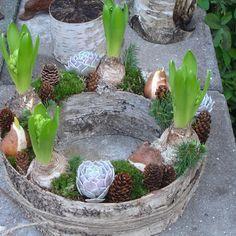 Udendørs dekoration med birkebark og hyacinter