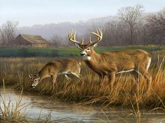 deer wallpaper free