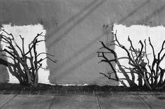 Lewis Baltz, Wall with Trees, 1979 Some Pictures, Taking Pictures, Love Photography, Street Photography, Lewis Baltz, Gelatin Silver Print, Through The Looking Glass, Present Day, Landscape