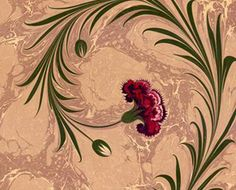 carnation ebru