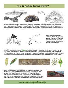 basket new balance vertebrates and invertebrates animals