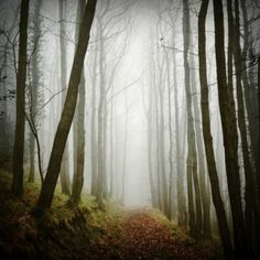 The Source Of Inspiration Forest Photography, Art Photography, Christian Morgenstern, Earth From Space, Source Of Inspiration, Natural World, The Great Outdoors, Landscape Paintings, Paths