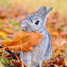 Bunny munching on a crispy leaf for dinner